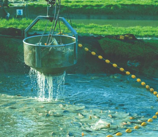 slatkovodno ribarstvo