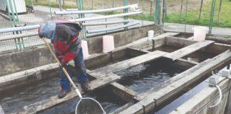 pastrva ribarstvo akvakultura