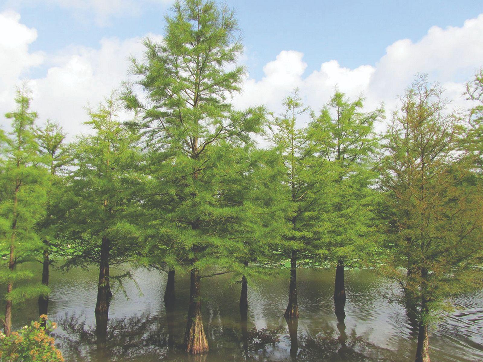 ukrasne vrste za poplavna područja