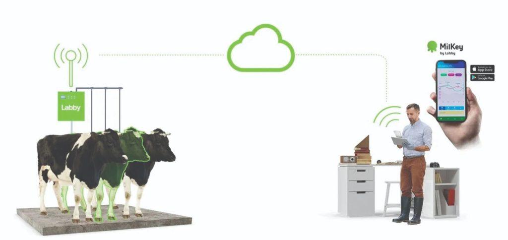 senzori u proizvodnji mlijeka robot za mužnju