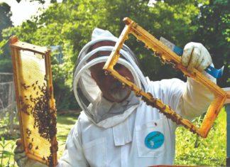 pčele i pčelinjak