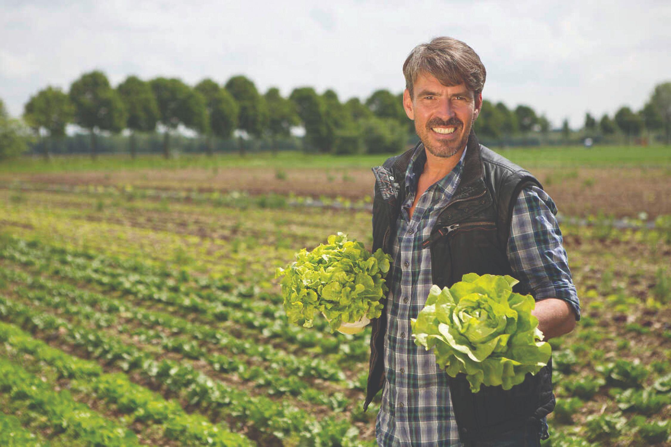 uzgoj lisnatog povrća lisnato povrće