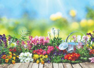radovi u vrtu ljeti