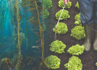 biostimulatori od morskih algi