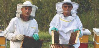 spajanje pčelinjih zajednica