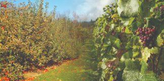 organska gnojiva pro-eco
