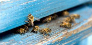 obavijest za pčelare pravilnik