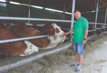 damir horvatić uzgoj krava