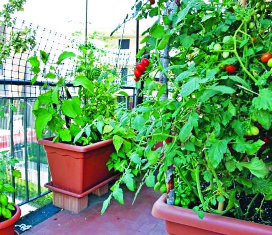 uzgojite povrće na balkonu