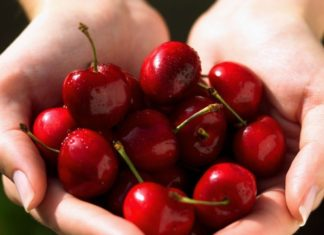 rane sorte trešnje
