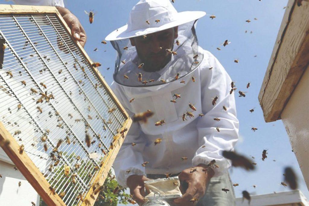 kvaliteta proizvoda od pčela