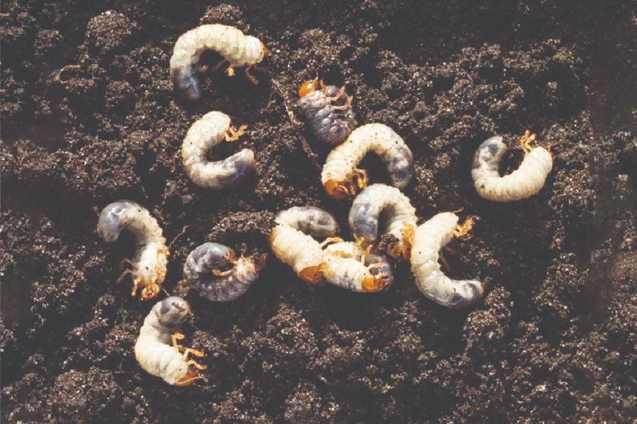jesenska obrada tla, priprema vrta za zimu