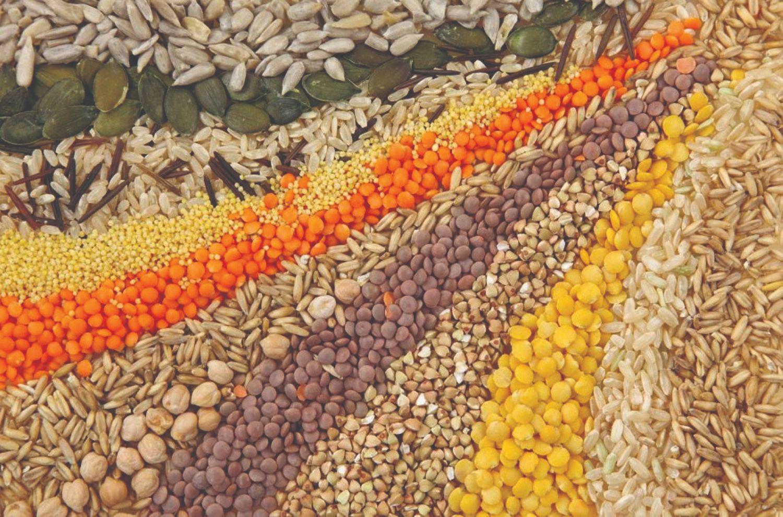 kako povećati domaću proizvodnju sjemena
