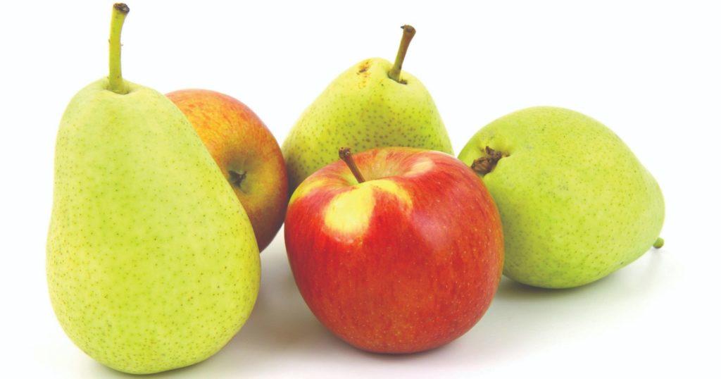 urod jabuka i krušaka