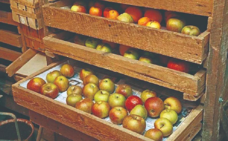 čuvanje jabuka nokon berbe