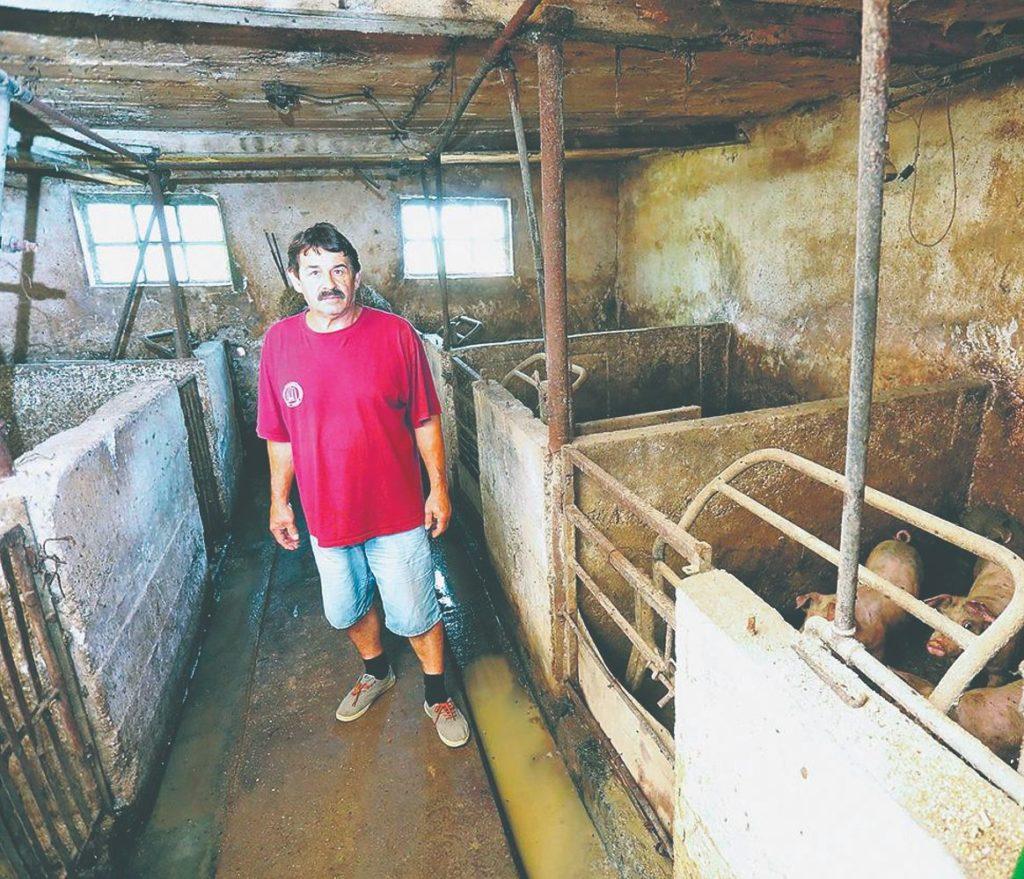 reprocentar za svinjogojstvo