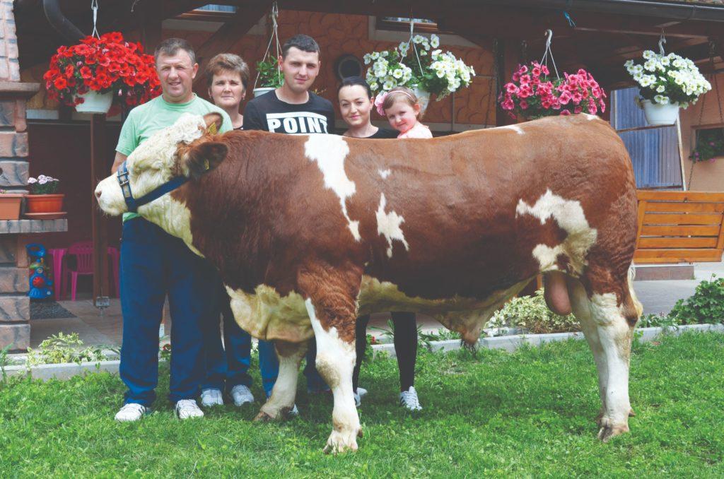 damir horvatić, uzgoj krava i proizvodnja mlijeka