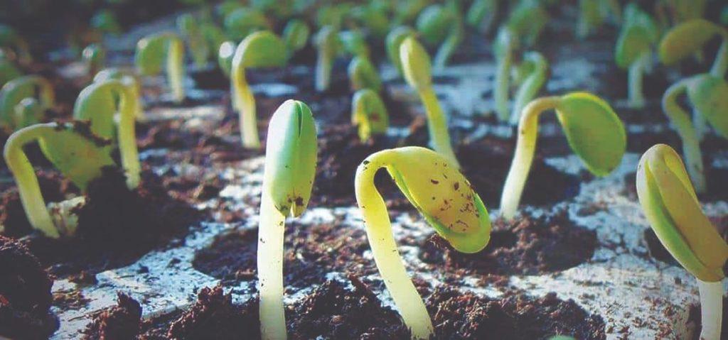 plodnost tla