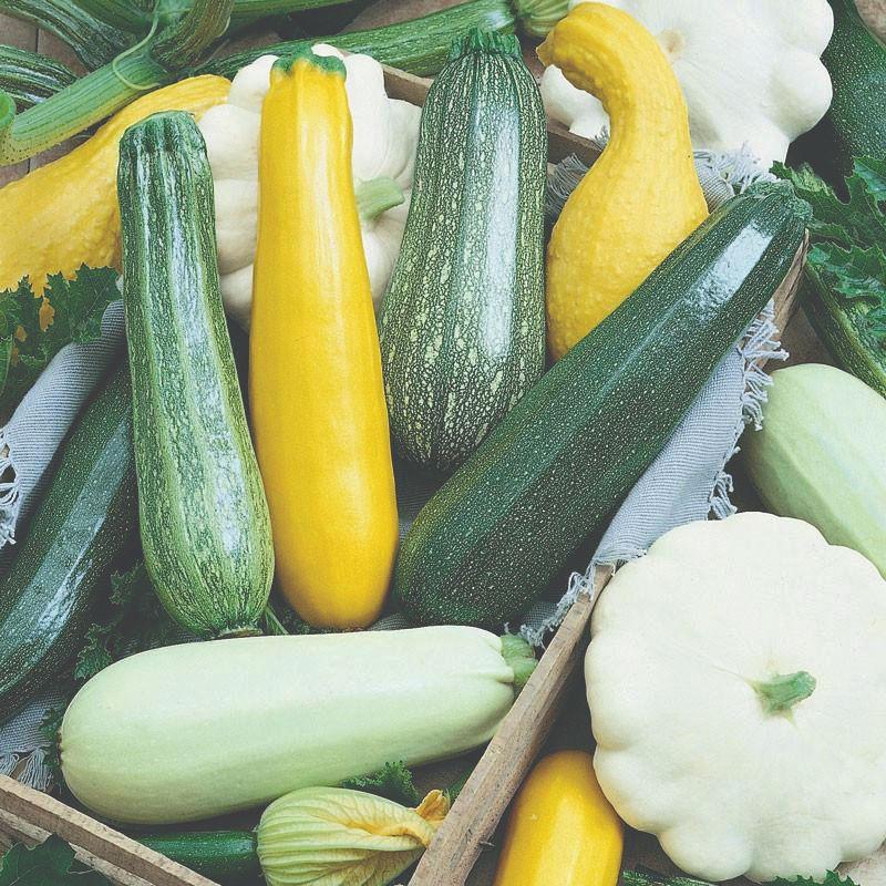 plodovito povrće tikvice i zvjezdaste tikvice