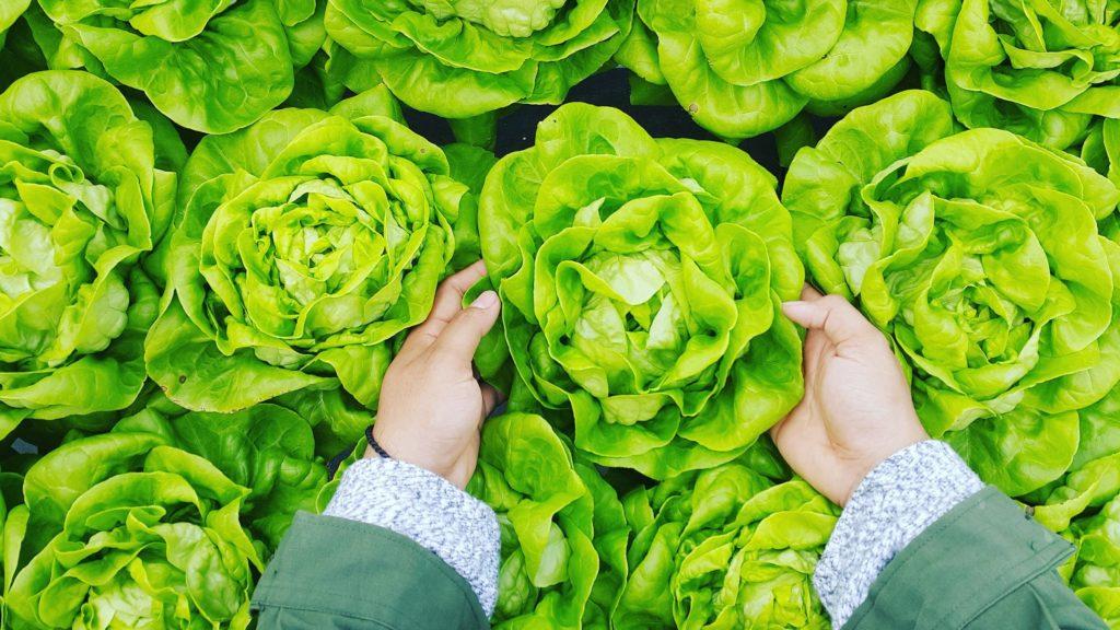 uzgoj lisnatog povrća