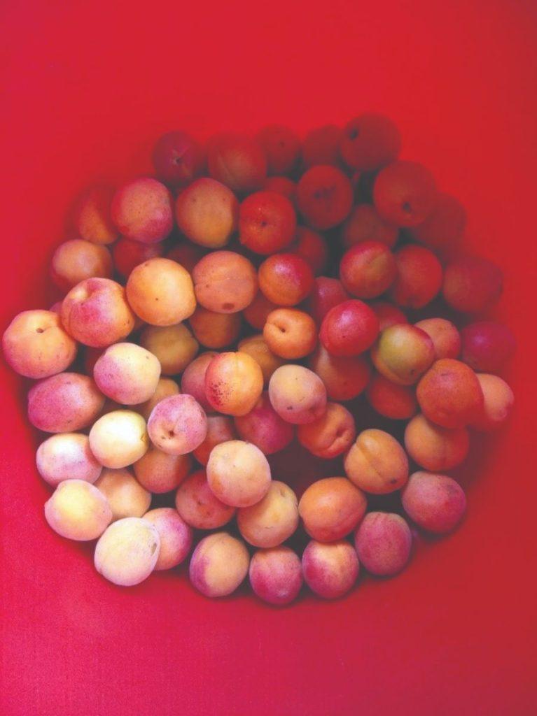 prerada plodova