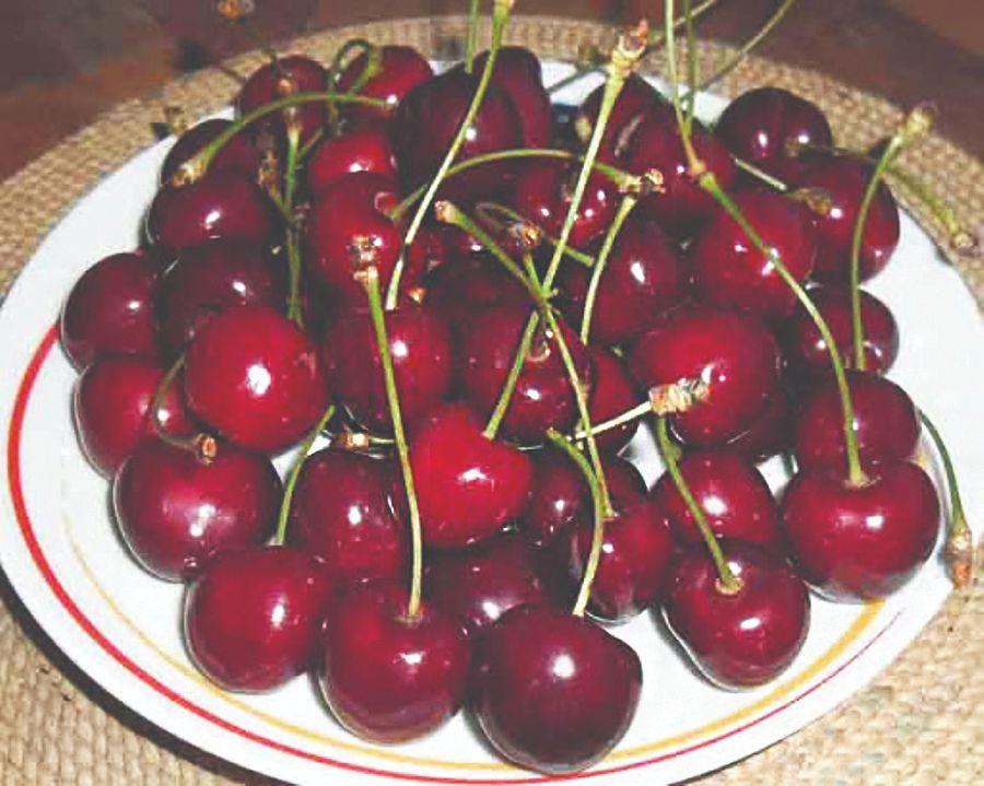 sorte trešnje