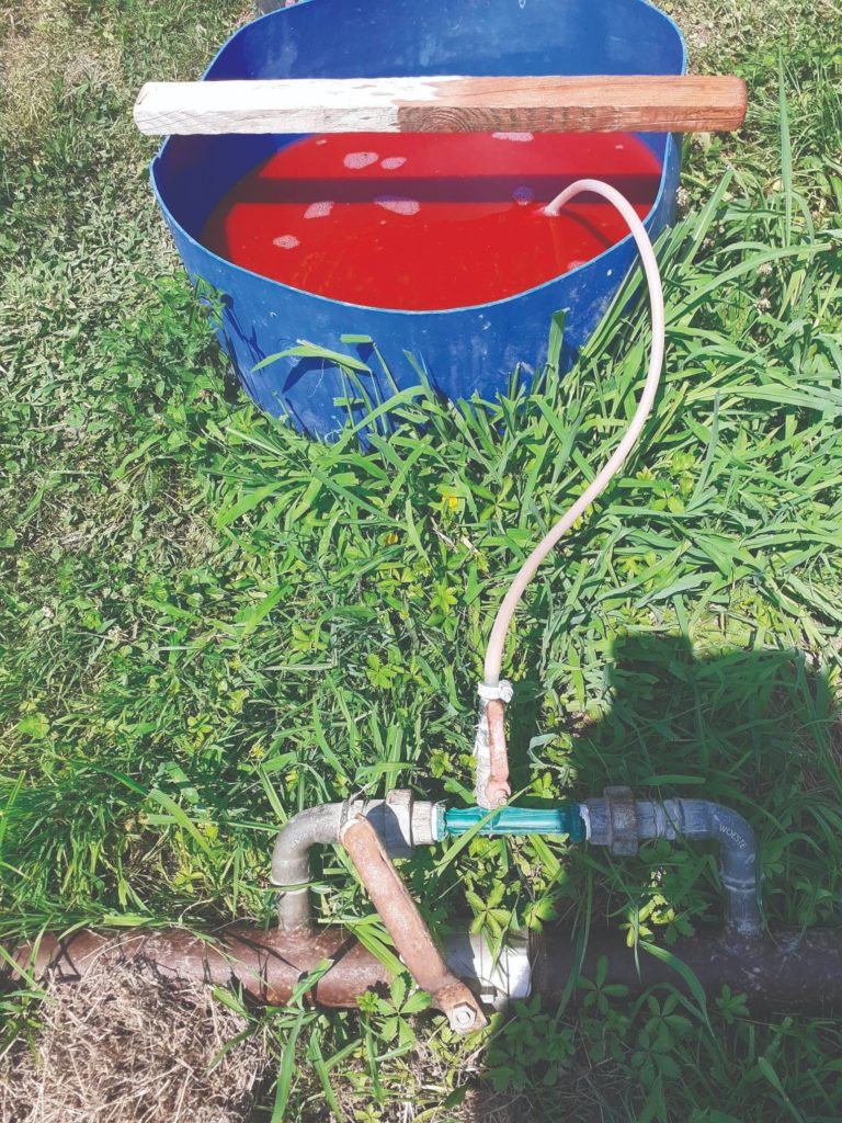 kako posaditi jagode
