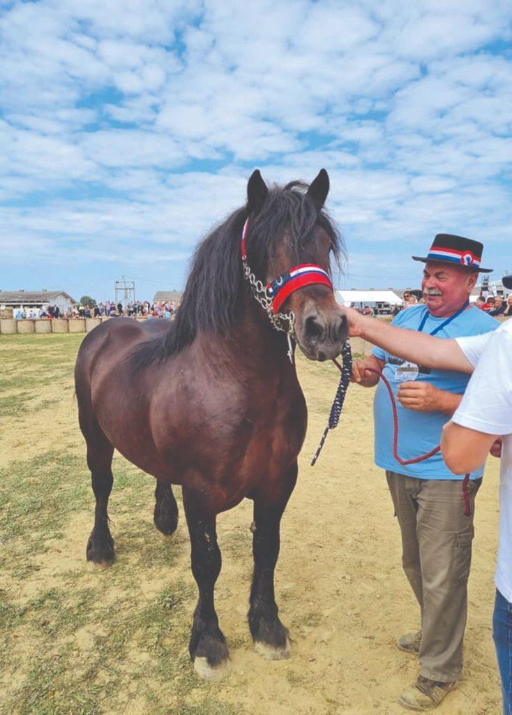 Patrik, šampion državne stočarske izložbe konja