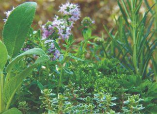 ljekovito i atraktivno bilje u vrtu