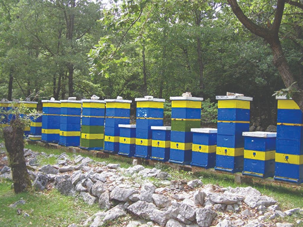 pčela i košnice