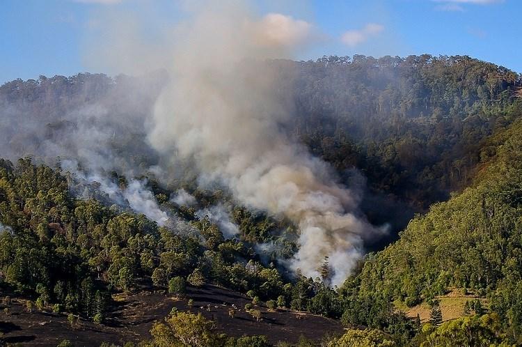 zaštita šume od požara