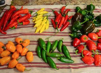 3. chili natjecanje u jedenju ljutih papričica