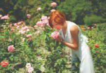 Najljepše ruže