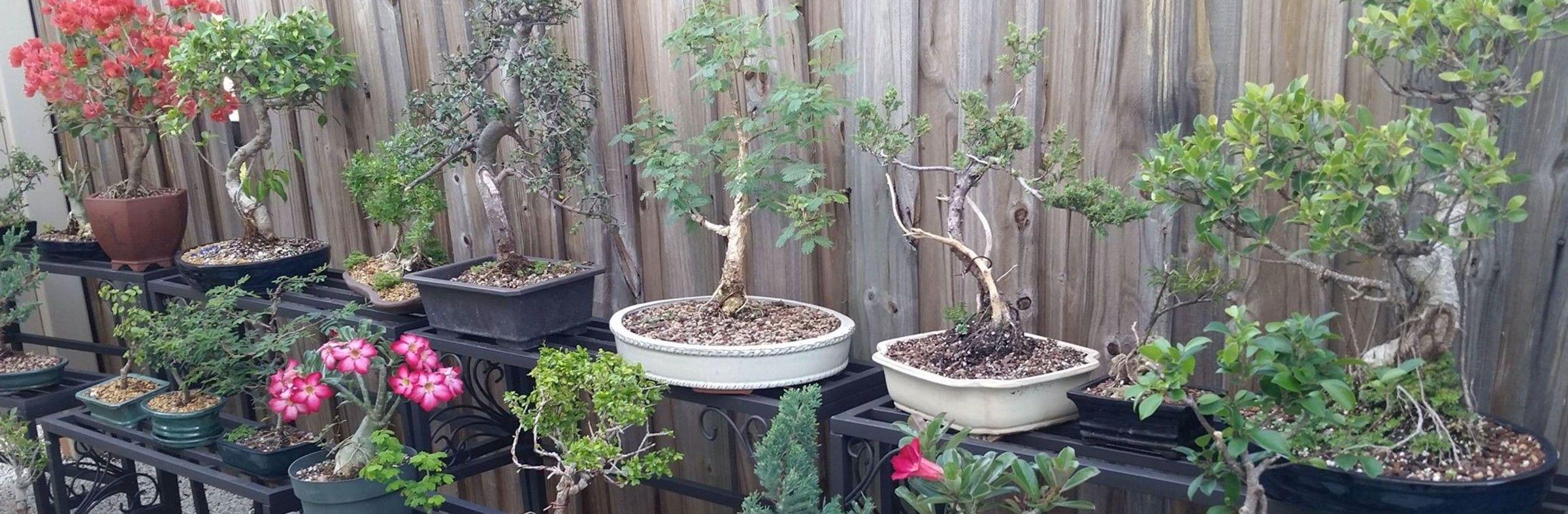 bonsai stabla