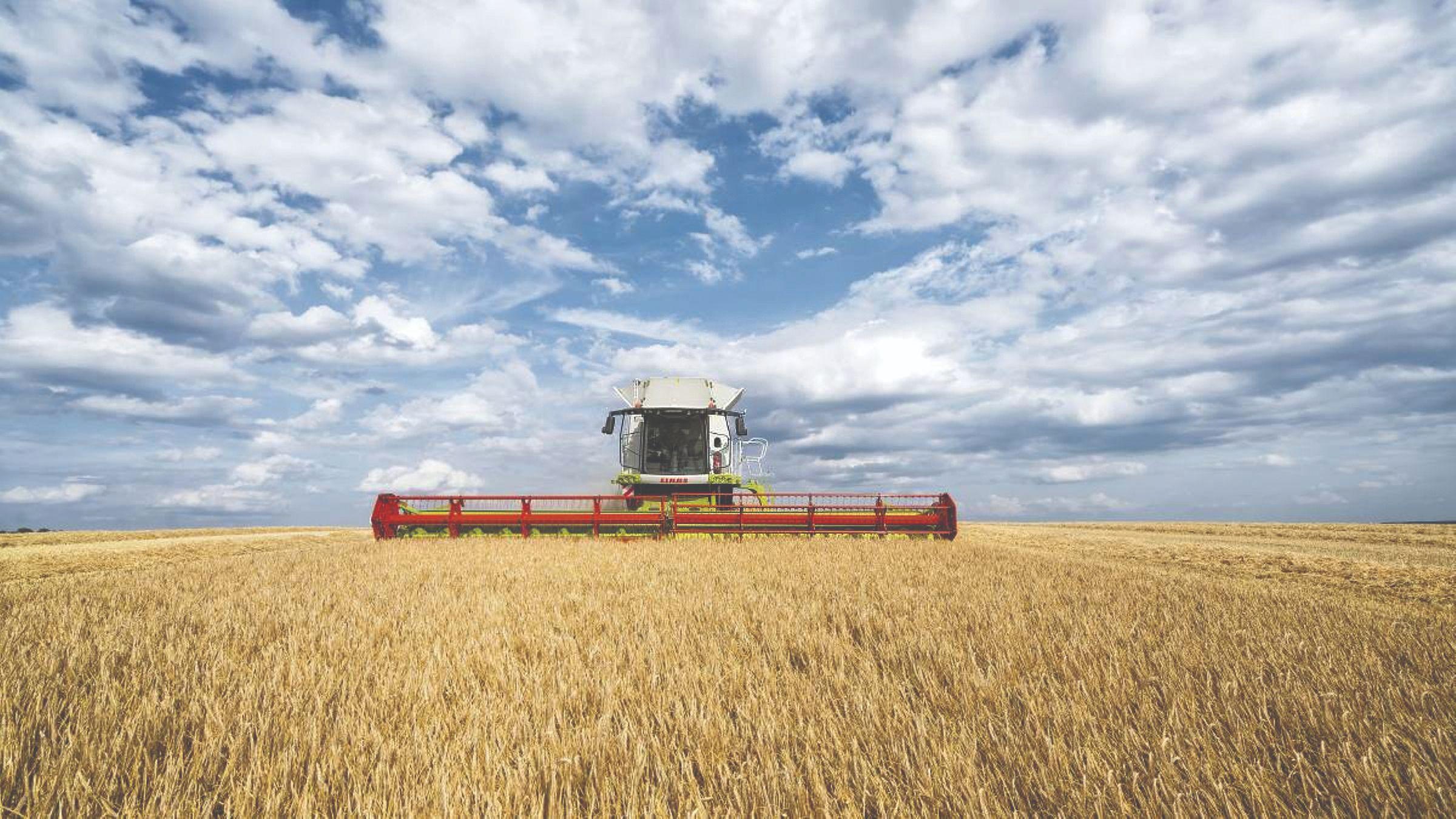 žetva ječma i pšenice